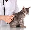 Ветеринарные клиники в Излучинске
